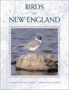 Birds of New England free download