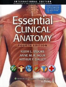 moore essential clinical anatomy 5th edition pdf free download