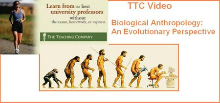 Mon premier blog page 2 download ttc biological anthropology an evolutionary perspective fandeluxe Images