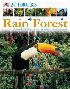 Rain Forest free download