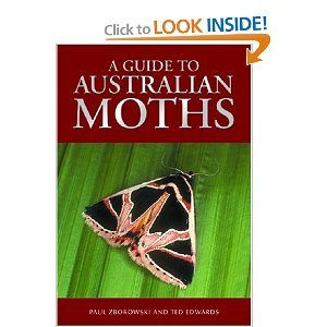Guide to Australian Moths free download