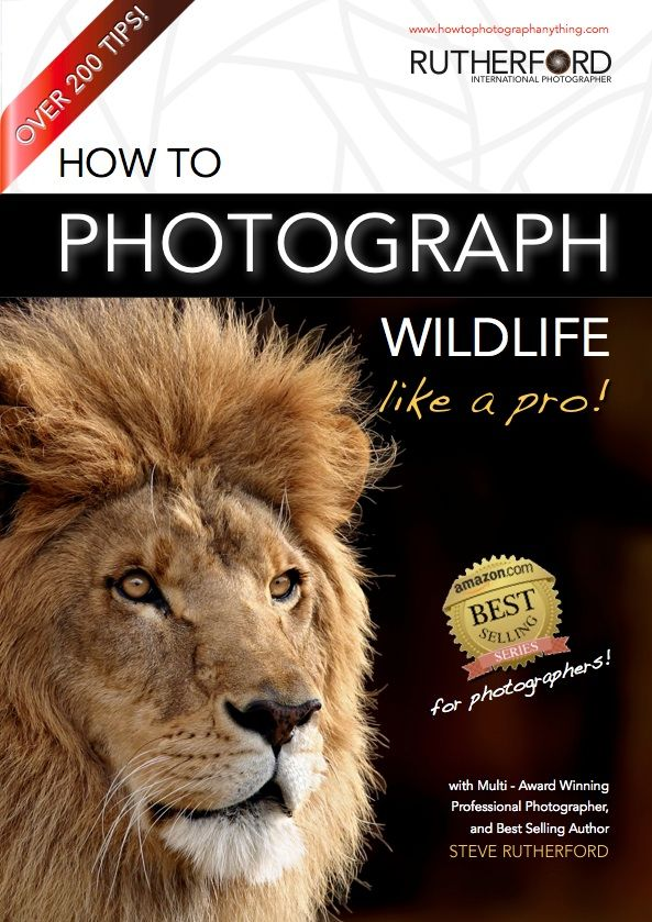 How to Photograph Wildlife Like a Pro free download