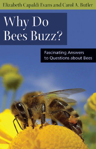 Why Do Bees Buzz?: Fascinating Answers to Questions about Bees free download