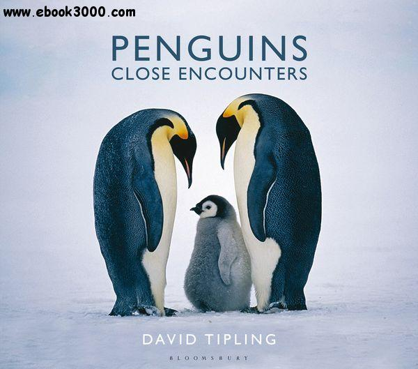 Penguins: Close Encounters free download